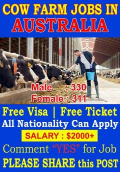 Cow Farm Jobs In Australia