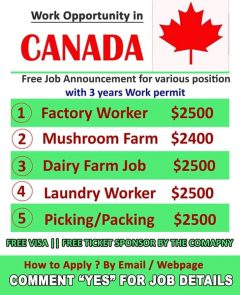 Work Permit Opportunity In Canada