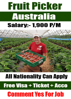 New Jobs Opening In Australia