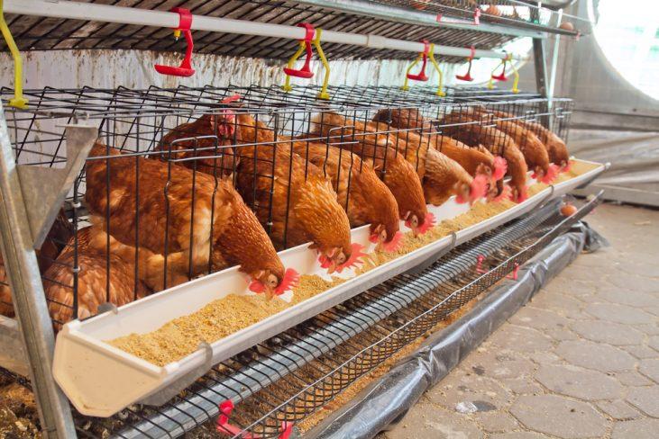 Labor In Farm Needed